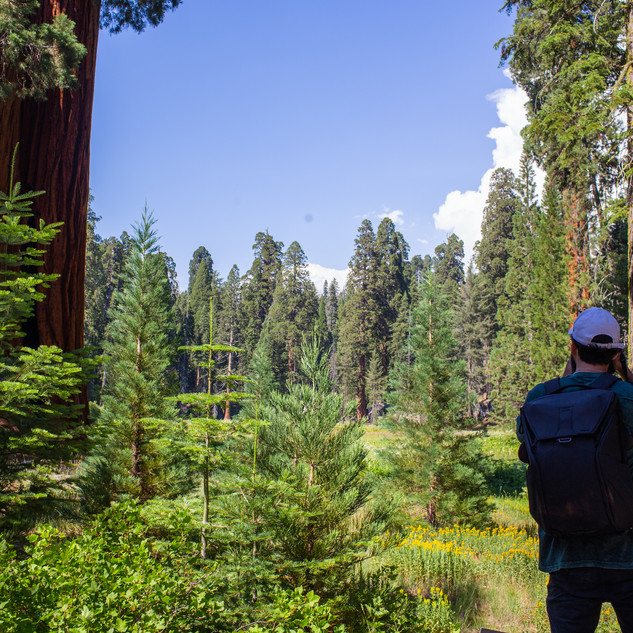 sequoia-national-park-photography-1.jpg