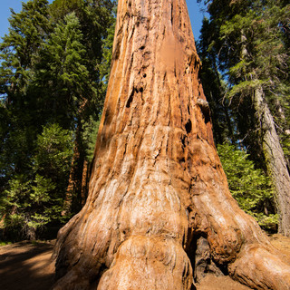 sequoia-national-park-photography-1-24.j