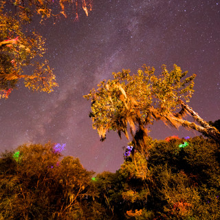 Florida Starscape