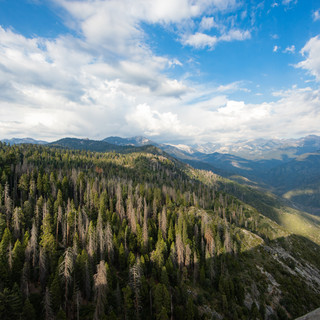 sequoia-national-park-photography-1-50.j