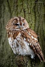 Owl sitting on brach
