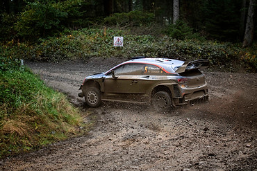WRC Wales Clocaenog stage - Thierry Neuville