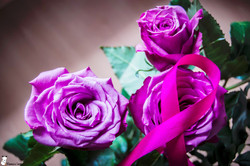 rose et ruban 2