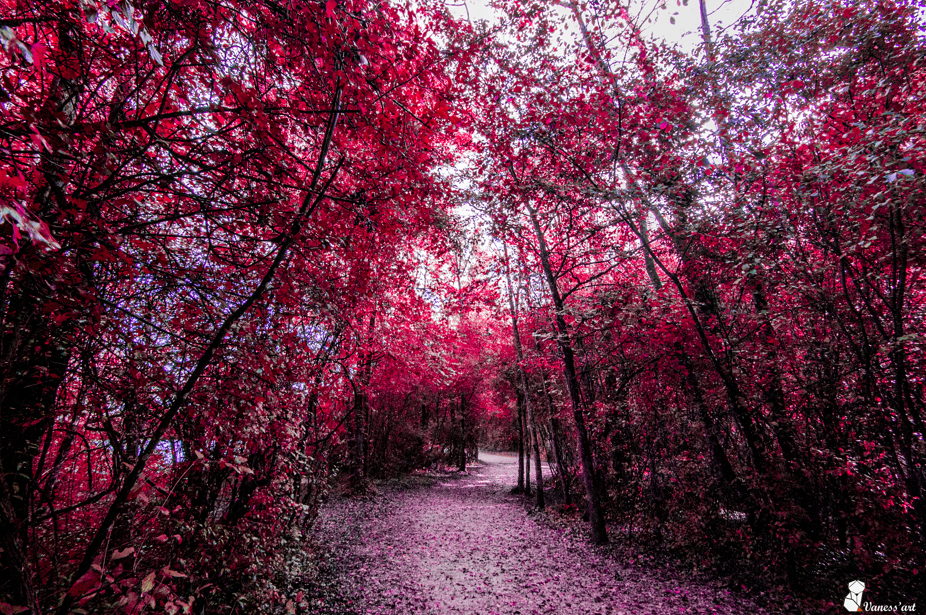 forêt rose