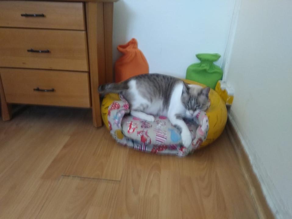 סדנת עיצוב צמיג - מיטה לחתול.jpg