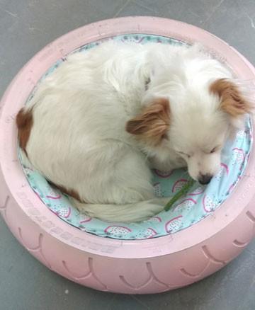 צמיג-מיטה-לכלב--צמיג-סדנאות-יצירה.jpg
