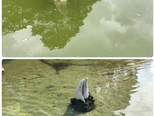 バクチャーの水質浄化作用