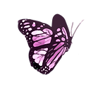 pink-butterfly_edited.png