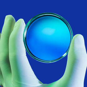hand in latex gloves holding Petri dish