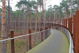 Wandelen of fietsen door de bomen