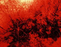 david_askevold_the_burning_bush_372_847.jpg