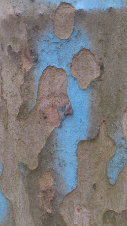 Blue the Heart's Bark