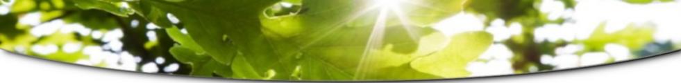 Maple Leaves(4)_Genericv1.png
