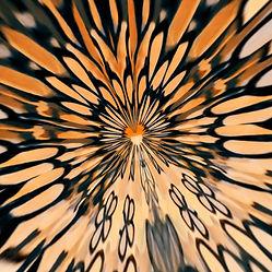 PicsArt_03-23-12.31.52.jpg
