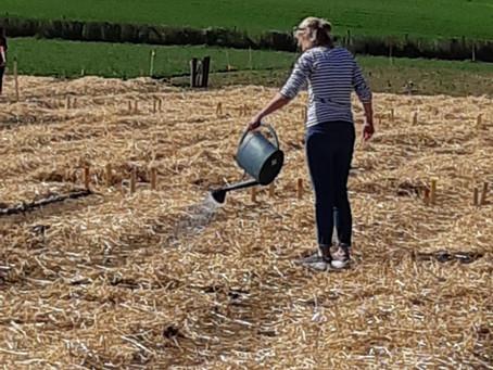 Semer, planter et récolter à Nyon