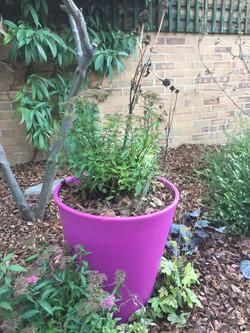Colourful Pots