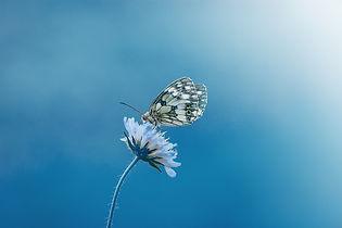butterfly-1611794_1920.jpg