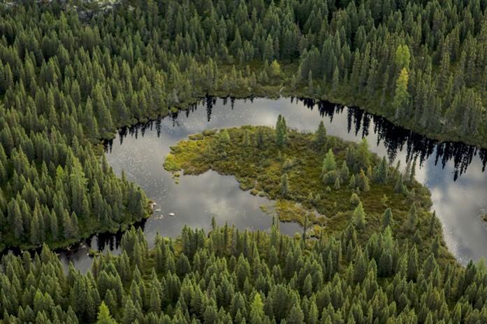 La Forêt Boréale 4