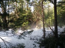 La Forêt Boréale 5