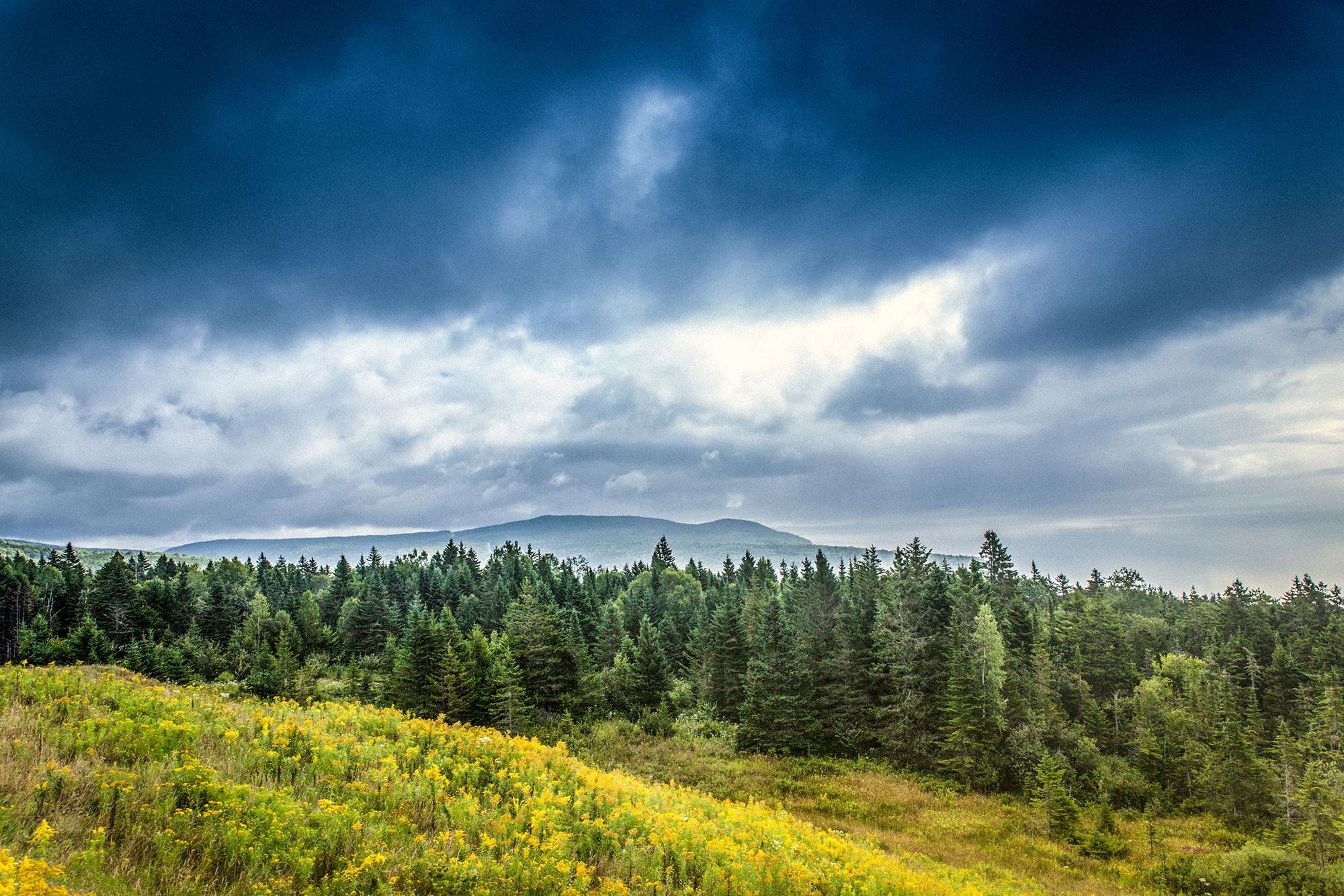 La Forêt Boréale 2