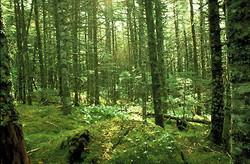 La Forêt Boréale 1