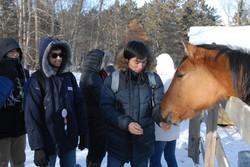 Feeding horse1