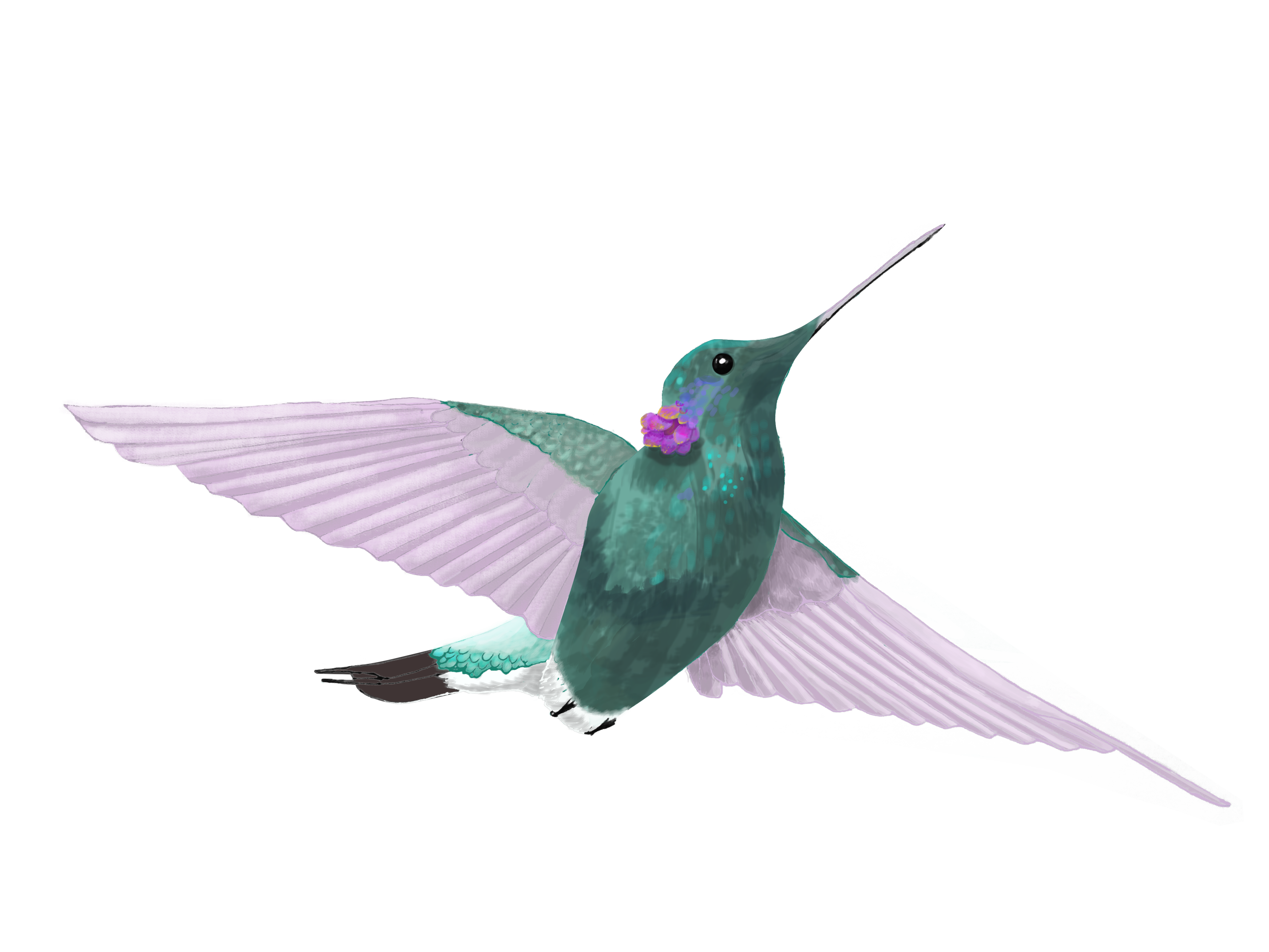Hummingbird by Cri Cri Studio