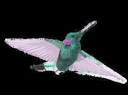 Hummingbird by Cri Cri Studio