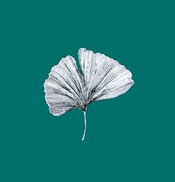 Ginko Biloba leaf by Cri Cri Studio