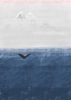 whale_illustratio_cricristudio