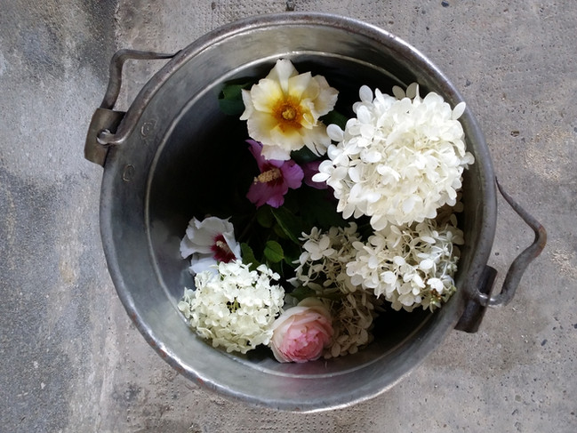 Flower hunting... dream hunting