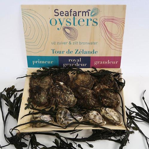 Seafarm Oesters Tour de Zélande