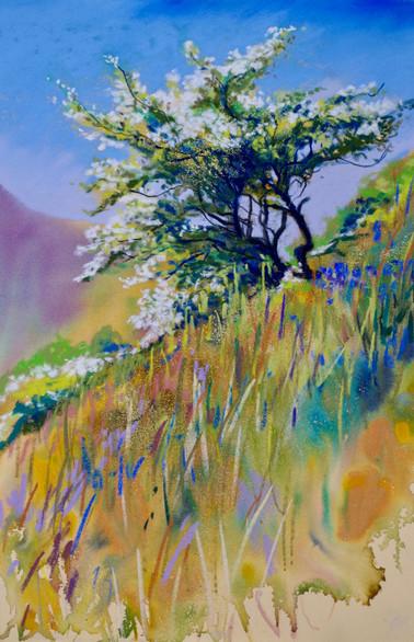 """""""Spring Hawthorn"""""""