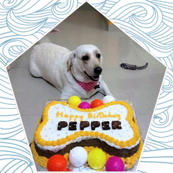 Pepper_Bday