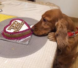 Phoebe eyeing the cake