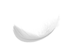 feather_PNG12978.png