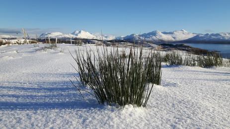 Winter view