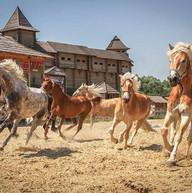 kievan-rus-park-horses-ilovemycity-kiev1