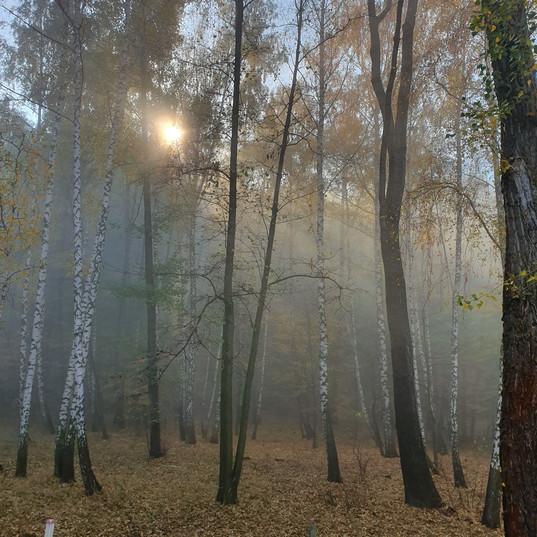 Mezhyhiryia_tour_ilovemycity_kyiv_wood.j