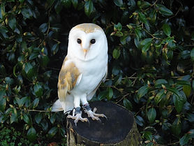 owl (1).jpeg