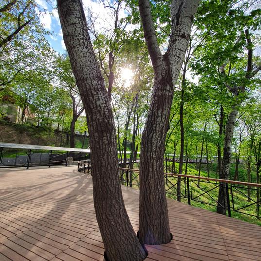 trees_ilovemycity_kiev_vedmi_witch_magic