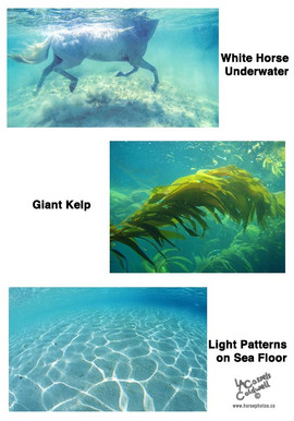 oceaniaREF_fb.jpg