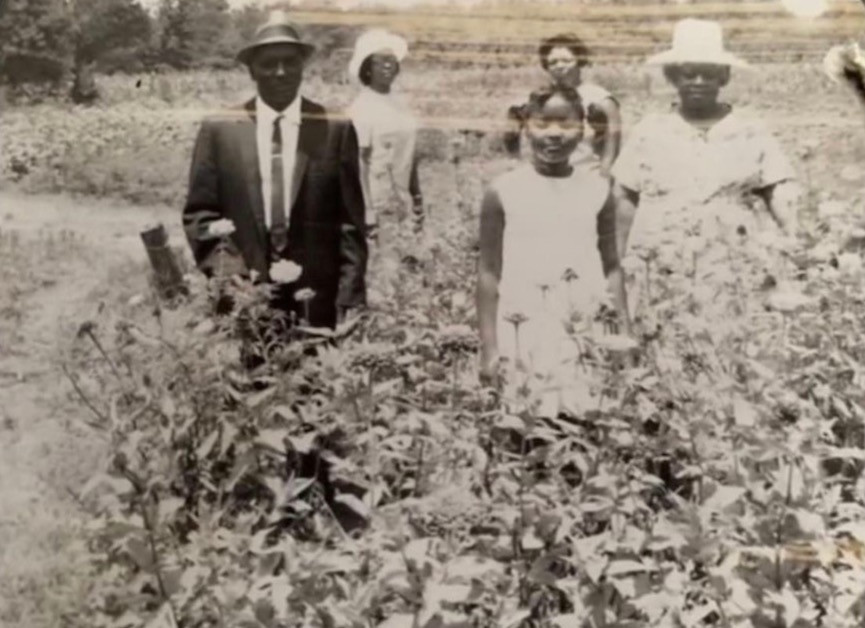 Grandfather and Mother; cotton fields of Mississippi