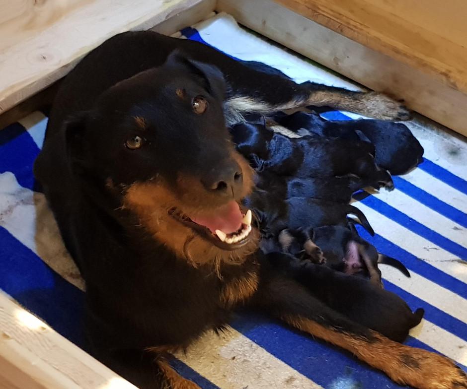Die stolze Mutter nach der Geburt