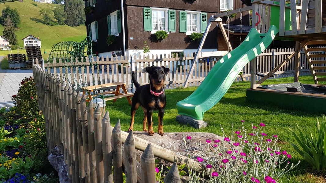 Grosser Auslauf in unserem Garten