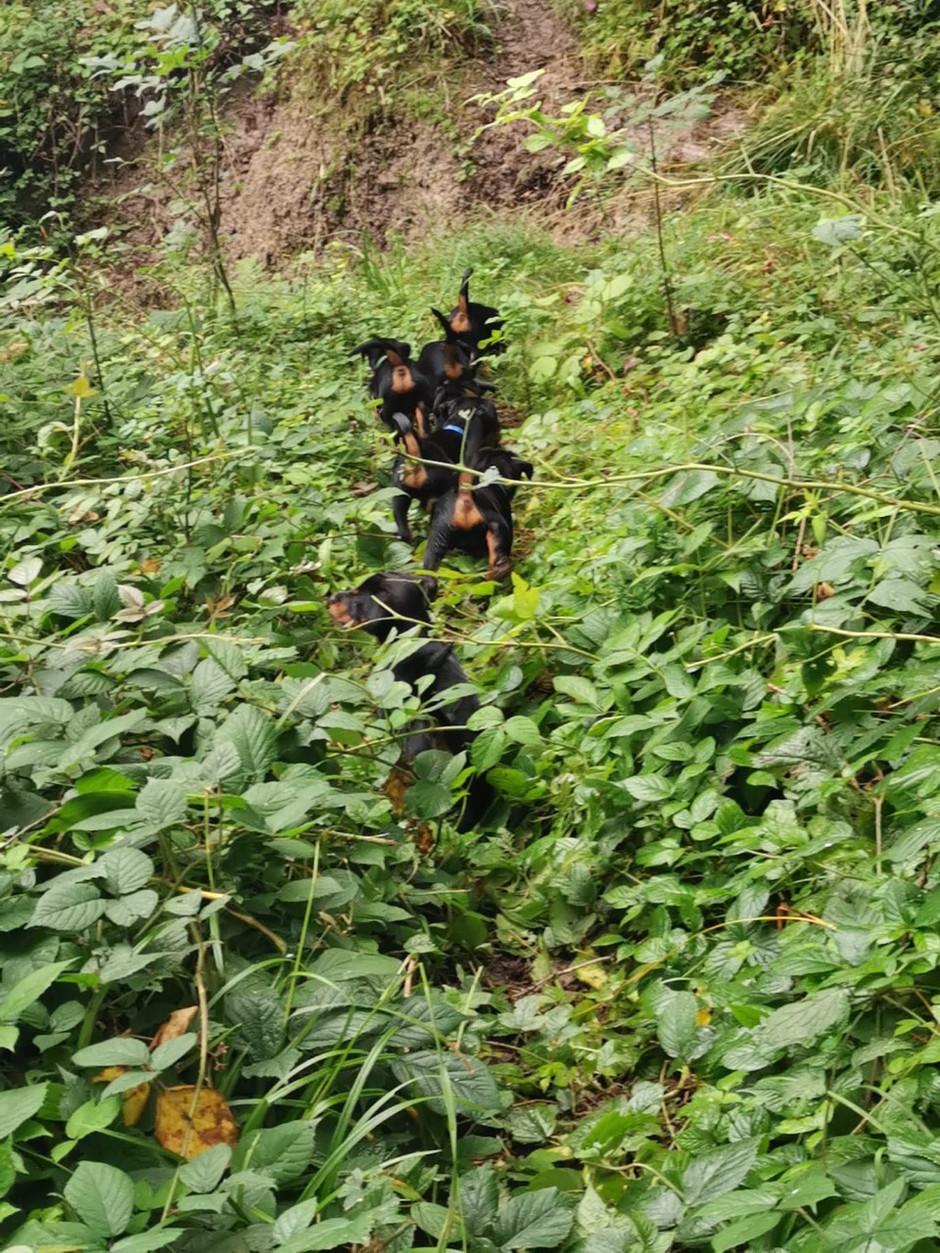 Mit 9 Wochen sind sie im Wald bereits sicher unterwegs