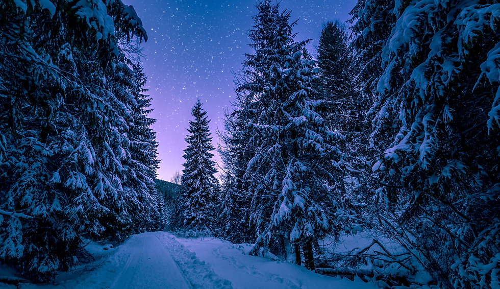 photography-of-trees-covered-with-snow-7
