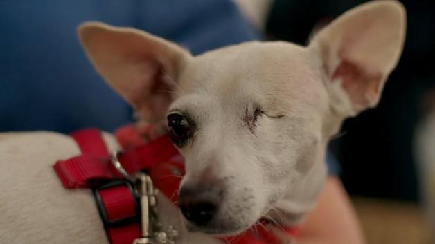 PetSmart Charities 300,000th Adoption