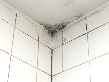 How to Keep Your Bathroom Tiles Free of Mold and Mildew