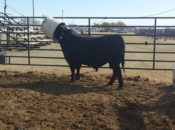 2016 Great Bend Farm & Ranch Show 3
